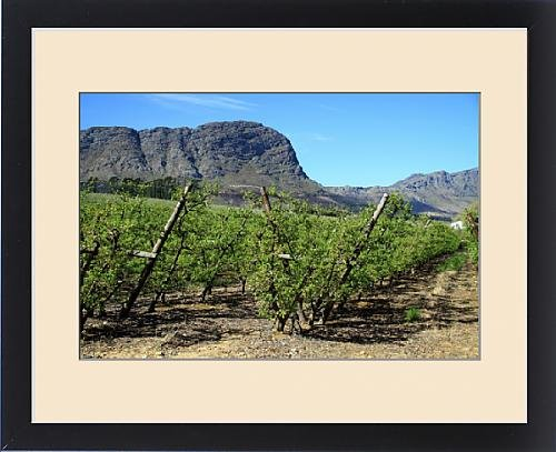 Framed Print of Vineyards of Franschoek, Cape winelands, Western Cape, South Africa, Africa by Fine Art Storehouse