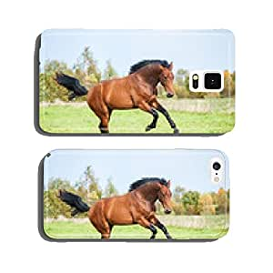 Bay horse running on the pasture in summer cell phone cover case Samsung S5