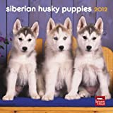 Siberian Husky Puppies 2012 7X7 Mini Wall Calendar