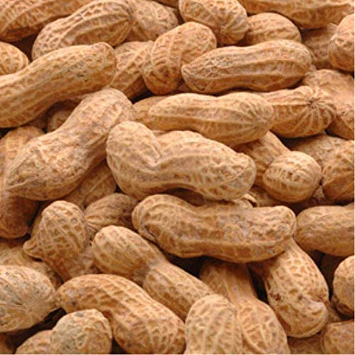 Peanut In The Shell, Salted, 25 Pound -- 1 Case