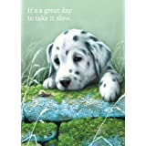 Tree-Free Greetings Relax Birthday Cards, 2 Card Set, Dalmatian Puppy, Multicolored (11652)