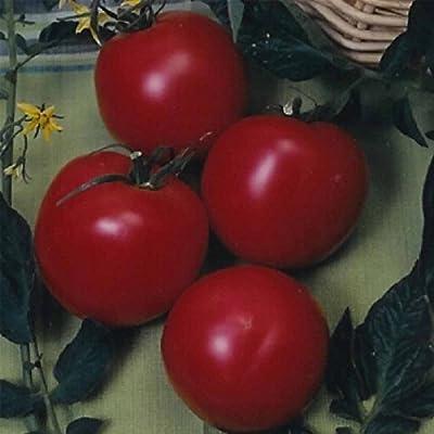 Tomato Garden Seeds - Arkansas Traveler - Non-GMO, Heirloom Vegetable Gardening Seed