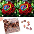 100 Pcs Adorable Flower Fragrant Rose Seeds Colorful Flower Home Garden Yard Decor Petal Plants