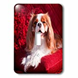 3dRose Danita Delimont - Dogs - Regal Cavalier rests on a red pillow, MR - Light Switch Covers - single toggle switch (lsp_258256_1)