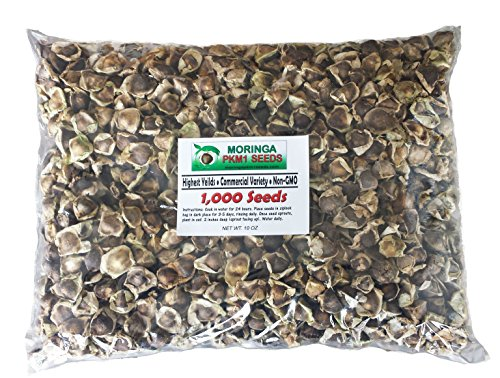 1000 Moringa Oleifera PKM1 Seeds, Free Seed Pack with Every Order! • Exclusive Variety | Highest Leaf + Seed Pod Yield, Great Germination Rate, GMO & Chemical Free