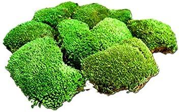 konserviertes Moos Kugelmoos kaufen Mooskugeln Deko-Moos Osterdeko Frühling Moss