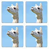 Luxlady Square Coaster Alpaca with head held high in the sky IMAGE 21168040 Customized Art Home Kitchen