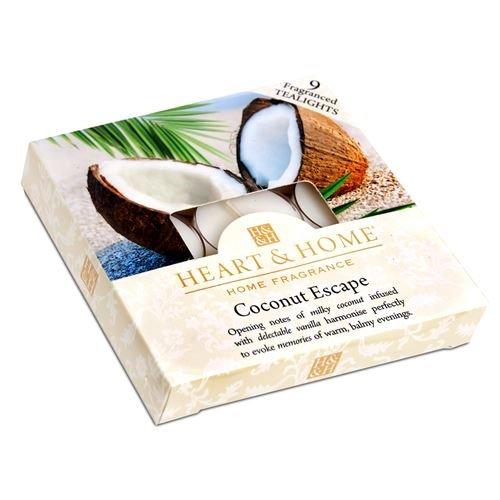 Kokosnuss-Fluchtkasten mit Teelicht-Kerzen