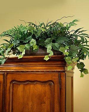 (Palm & Ivy Armoire Silk Planter)