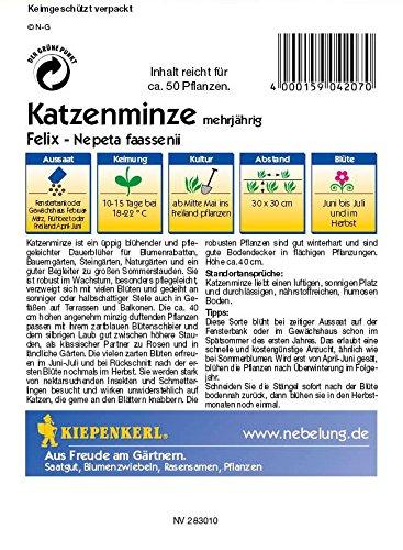 Nepeta fassenii Katzenminze Felix blau: Amazon.de: Haustier