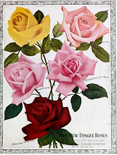 (Dingee guide to rose culture -.West Grove, | Catalogs