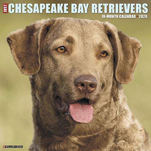 - Just Chesapeake Bay Retrievers 2020 Wall Calendar (Dog Breed Calendar)