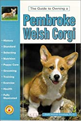 The Guide to Owning a Pembroke Welsh Corgi