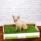 FRESH PATCH Disposable Dog Potty with REAL Grass, My Pet Supplies