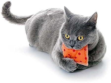 Family Zoo | Cojín | Cojín Knuddel | Gatos | Catnip | gato Menta | 1 pieza: Amazon.es: Productos para mascotas