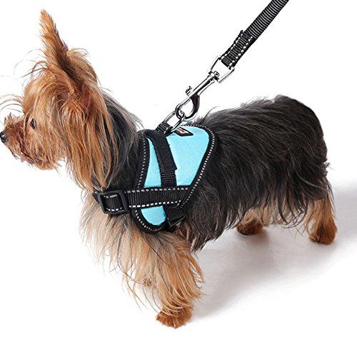 Alfie Pet - Justice Harness Vest and Leash Set - Color: Blue, Size: Small