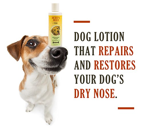 Burt S Bees Paw Nose Lotion For Dogs