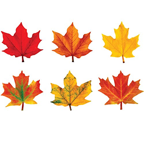 Maple Classic Board - Trend Enterprises T-10958BN Maple Leaves Classic Accents Variety Pack, of 6