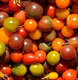 Rainbow Cherry Tomato Mix Seeds Sizes up to 1/4LB Bulk Heirloom Colors Blend #94 (50 Seeds)