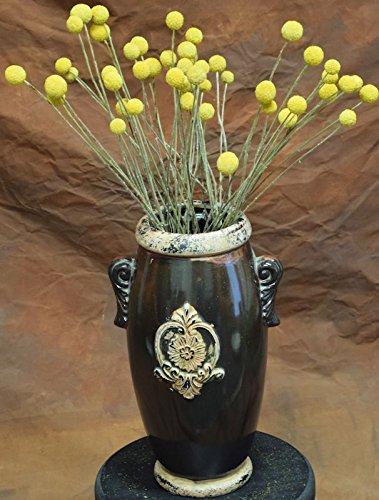 Amazon dried craspedia billy balls flowers 16 22in long dried craspedia billy balls flowers 16 22in long yellow on green stem mightylinksfo