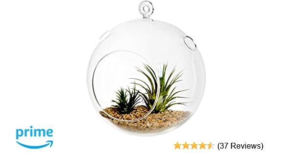 Amazon Com Mygift 7 Inch Large Clear Glass Hanging Air Plant