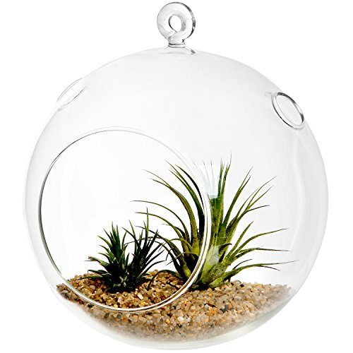 7-Inch Large Clear Glass Hanging Air Plant Terrarium Ball / Votive Candle Holder w/ Flat Base & Loop Hook by MyGift