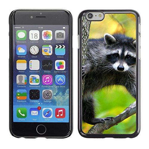 """Premio Sottile Slim Cassa Custodia Case Cover Shell // V00003744 raton laveur dans un arbre // Apple iPhone 6 6S 6G PLUS 5.5"""""""