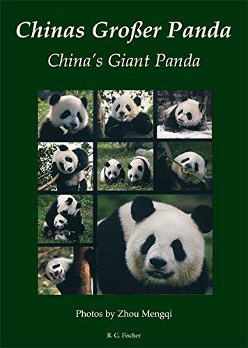 Chinas Großer Panda. China's Giant Panda