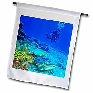 Danita Delimont - Scuba Diving - Scuba Diving, Green Sea Turtle, Southern Maldives-AS24 SWS0077 - Stuart Westmorland - 12 x 18 inch Garden Flag (fl_74828_1)