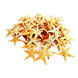 100 Pcs Small Starfish Star Sea Shell Beach Craft 1