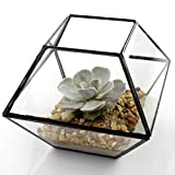 NW Wholesaler Water Tight Glass Terrariums for Succulents, Cactus and Air Plants by (10-Sided)