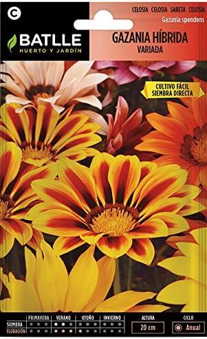 Semillas de Flores - Gazania híbrida splendens variada - Batlle ...