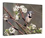 """iRocket Canvas Prints Wall Art - Blue Jay In A Bradford Pear Tree - Wood Board Background Stretched Canvas Wrap Ready To Hang For Home And Office Decoration - 20"""" X 14"""""""