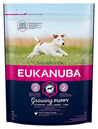 EUKANUBA Puppy Small Breed Chicken 1 Kg: Amazon.es: Productos para mascotas