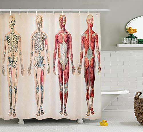 Ambesonne Human Anatomy Shower Curtain, Vintage Chart of Body Front Back Skeleton and Muscle System Bone Mass Graphic, Cloth Fabric Bathroom Decor Set with Hooks, 70