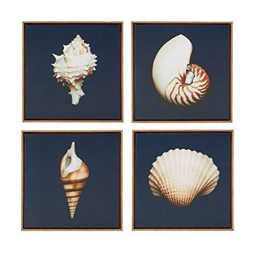 seashell pictures - 4