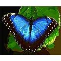 LovetheFamily 数字油絵 数字キット塗り絵 手塗り DIY絵 デジタル油絵 青い蝶 40x50cm ホーム オフィス装飾の商品画像
