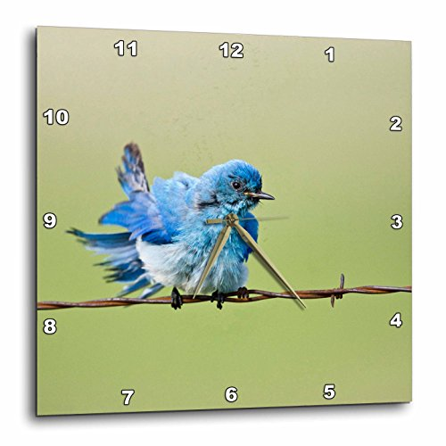 3dRose dpp_94319_1 Custer State Park, South Dakota, Mountain Bluebird-Us42 Ldi0000-Larry Ditto-Wall Clock, 10 by 10-Inch