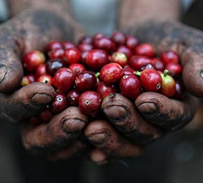 1 lb 100% Grade 1 Jamaican Blue Mountain Coffee, Full City Roast