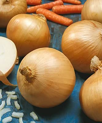 Walla Walla Onion Seeds - Allium Cepa - 1 Grams - Approx 285 Gardening Seeds - Vegetable Garden Seed