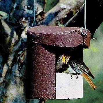 Caja nido con entrada abierta: Amazon.es: Jardín
