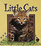 Little Cats, Bobbie Kalman and Tammy Everts, 0865057117
