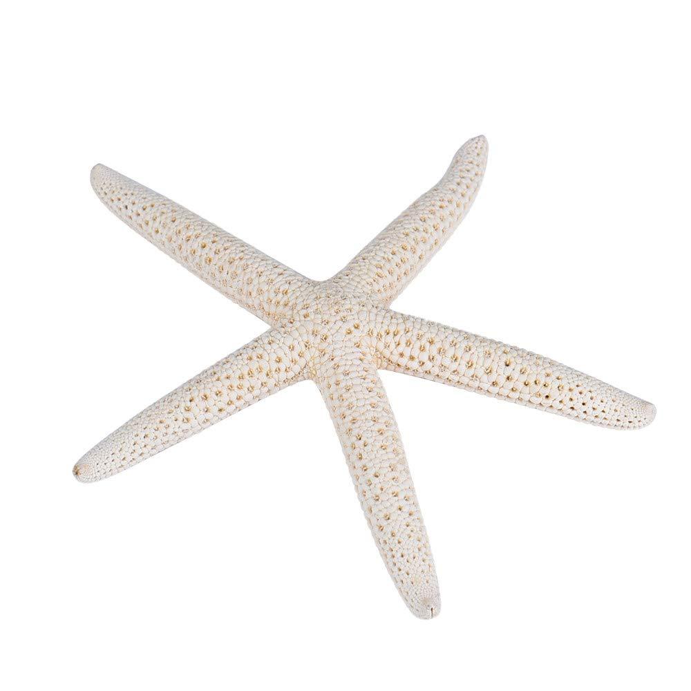 VRTUR 1 Pezzi 10 –  12 cm Bianco Naturale Finger Sea Star Wedding Decor Ocean Style