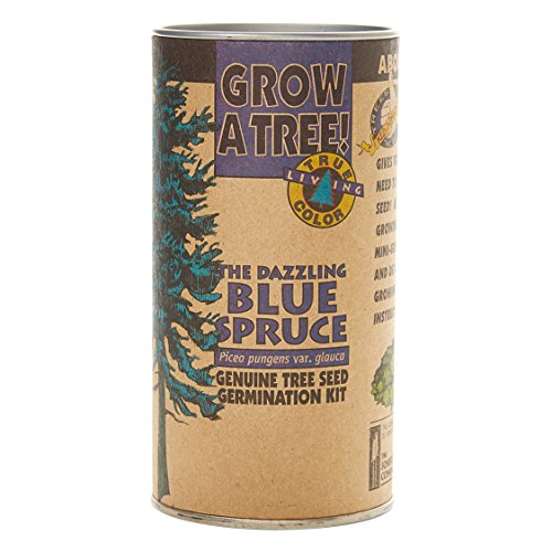 Colorado Blue Spruce | Tree Seed Grow Kit | The Jonsteen ()