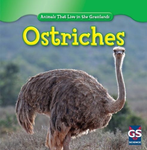 Ostriches (Animals That Live in the Grasslands)