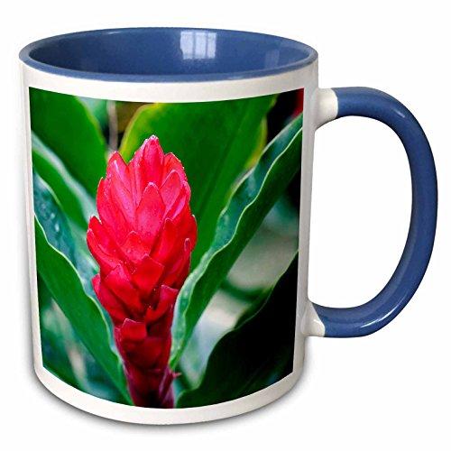 3dRose Danita Delimont - Flower - Red Flowering Bromeliad, Costa Rica - 15oz Two-Tone Blue Mug (mug_229299_11)
