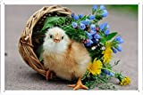 "Tin Poster Sign 8""x12"" - Chicken Basket Flowers Baby 26013 Produced by Petpetpet"