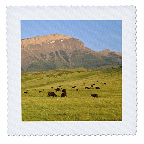 (3dRose qs_91650_4 Black Angus Cattle, Farm Animal, Rocky Mountain, MT - US27 CHA0889 - Chuck Haney - Quilt Square, 12 by 12-Inch)