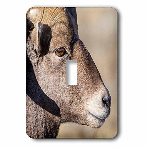 3dRose Danita Delimont - sheep - Wyoming, Teton County, National Elk Refuge, Bighorn sheep ram portrait - Light Switch Covers - single toggle switch (lsp_260614_1) - National Elk Refuge