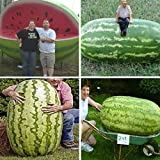 Pinkdose 30/Bag Giant Watermelon,Sweet Taste Fruit and Vegetables Very Giant Delicious Free Shipping